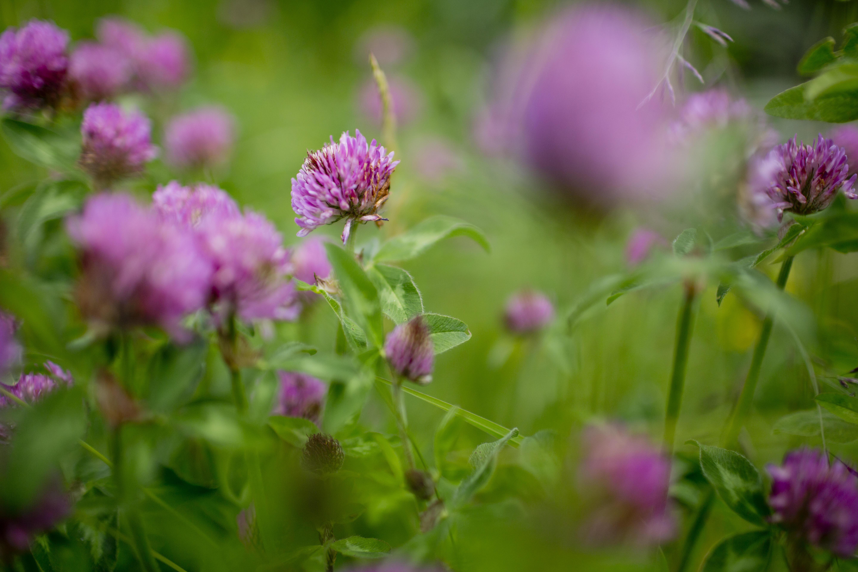 Bilde av blomst