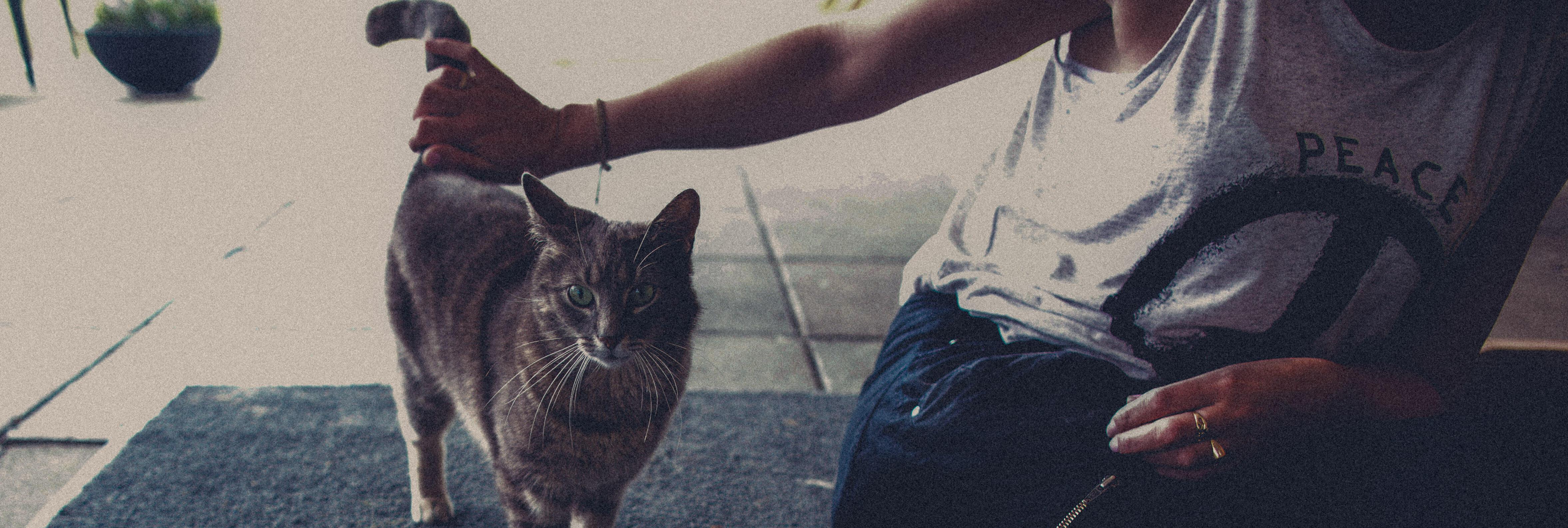 Kvinne som klapper katt.